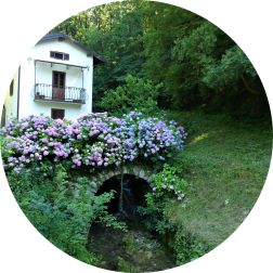 House by the stream